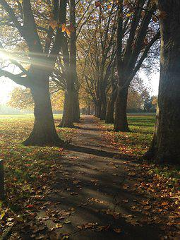 Autumn, Path, Walk In The Park, Rays Of Light, Trees