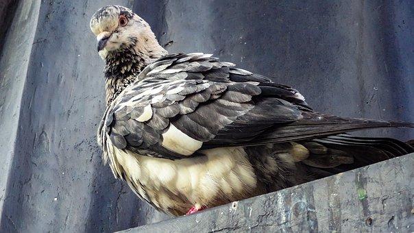 Wildlife, Pigeon, Bird, Little Birds, Nature, Pigeons