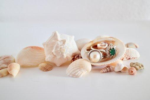 Rings, Jewelry, Precious, Shells, Treasure, Gold