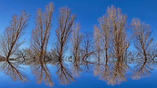 Background, Mirror, Reflection, Optical Illusion, Tree