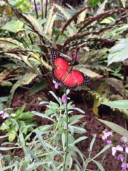 Butterfly, Butterflies, Nature, Insect, Summer, Spring
