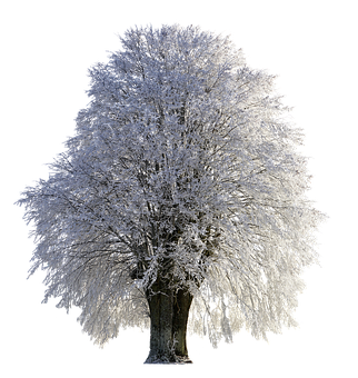 Tree, Winter, Wintry, Snow, Cold, Frost, Png, Frozen