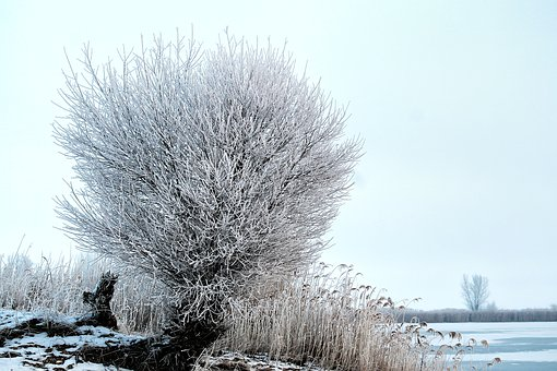 Tree, Pasture, Hoarfrost, Snow, Winter, Wintry, Nature