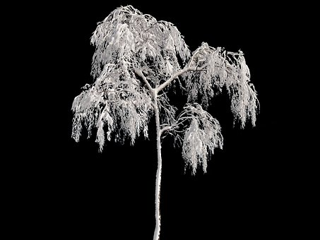 Tree, Winter, Wintry, Snow, Cold, Frost