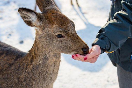 Feed, Food, Feeding, Foraging, Roe Deer, Red Deer, Zoo
