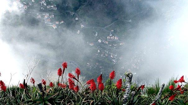 Nuns Valley, Madeira, Aloevera, Fog, Plant, Red