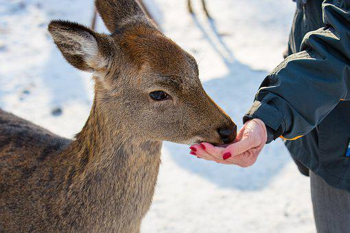 Feed, Food, Feeding, Foraging, Roe Deer, Red Deer, Zoo