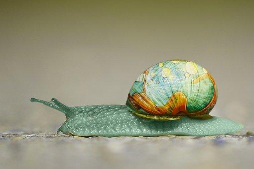Snail, Graffiti, Animal, Unreal, Art, Shell, Painted
