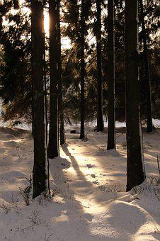 Forest, Snow, Winter, Winter Forest, Snow Landscape