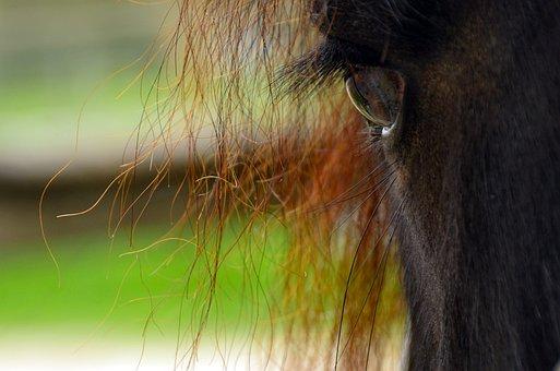 Horse, Animal World, Wildlife Photography, Big Horse