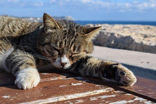 Cat, Stray, Animal, Cute, Kitty, Homeless, Resting