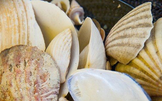 Clam, Low Tide, Beach, Sea, Shells, Mussels