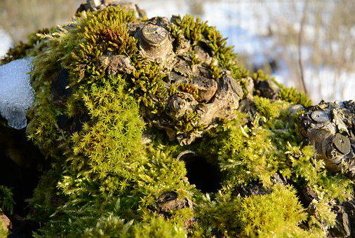 Root, Moss, Tree Stump, Nature