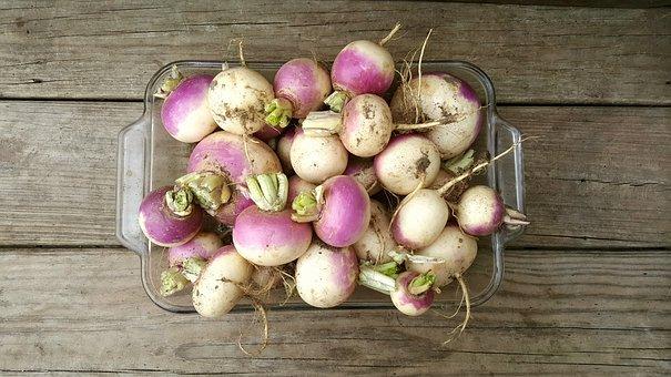 Turnip, Wood, Farm, Rustic, Vegetable, Root