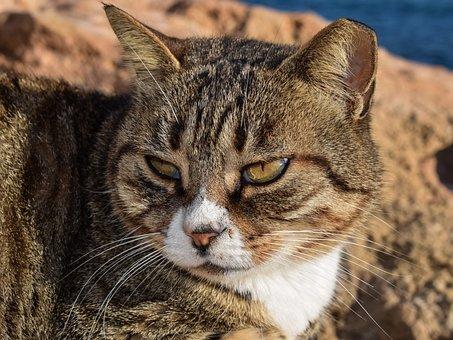 Cat, Stray, Animal, Outdoor, Portrait, Face, Eyes, Sad