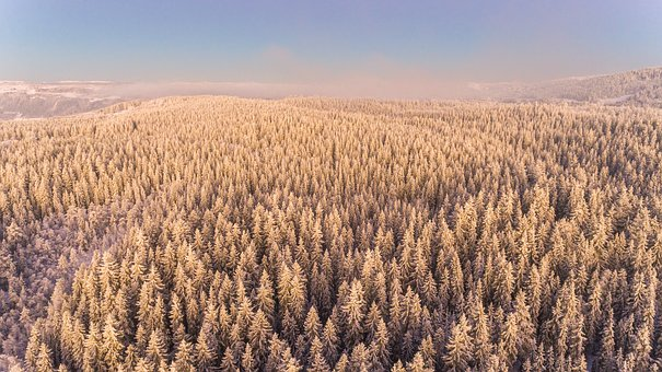 Winter, Landscape, Snow, Forest, Trees, Nature, Idyllic