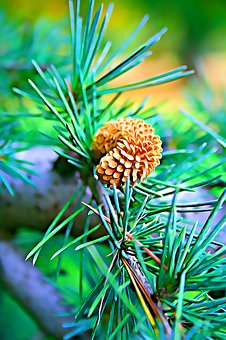 Digital, Graphics, Pine, Cone, Green, Branch, Mood