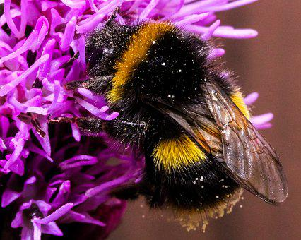 Bee, Insect, Nature, Honey, Animal, Fly, Bug, Yellow