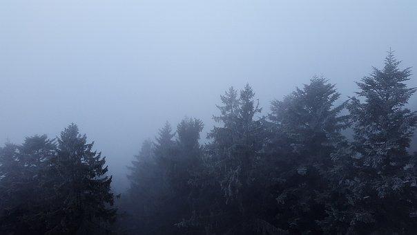 Fog, Canopy, Treetop