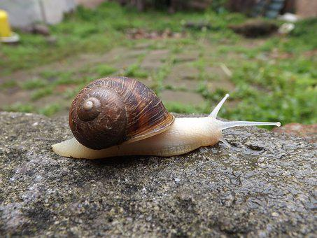 Snail, Molluscum, Spiral