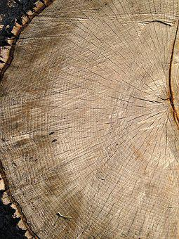 Tree, Tree Rings, Wood, Timber, Old, History, Growth