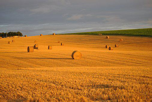 Wheat, Field, Straw, Roller, Harvest, Agriculture