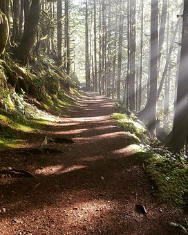Woods, Misty Path, Rays Of Sun, Ethereal