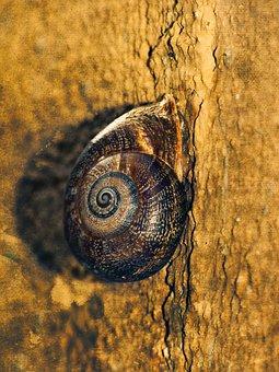 Snail, Spiral, Wall, Shell