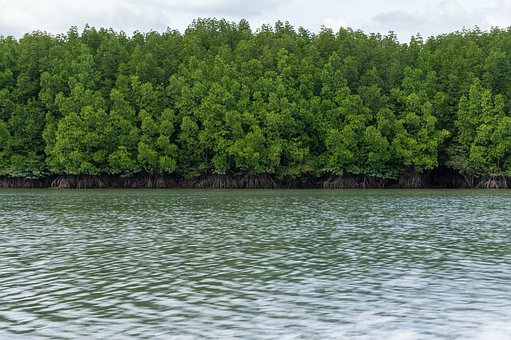 Pa, The Mangrove Forest, Sea, Nature, Tree, Thailand