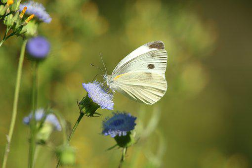 Butterfly, Nature, Flower, Insect, Green, Colorful
