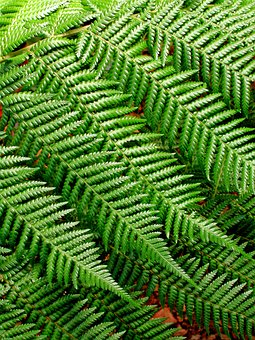 Fern, Background Pattern, Leaves, Nature, Design, Plant