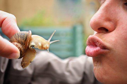 Snail, Kiss, Reptile, Close, Shell, Woman, Culinary