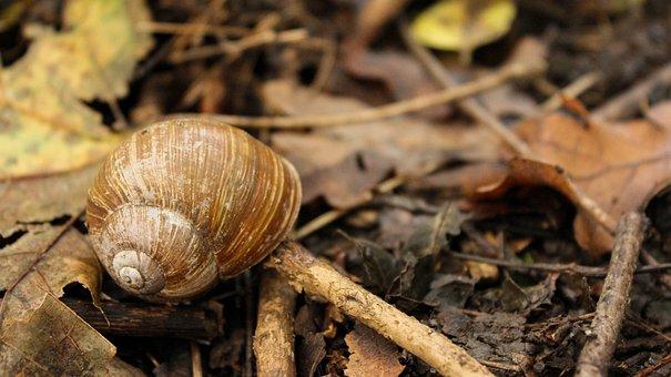 Snail, Snail Shell, Autumn, Invertebrates, Nature