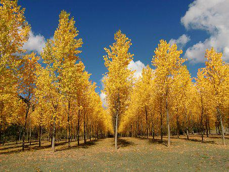 Trees, Autumn, Leaves, Yellow, Forest, Dried Leaves