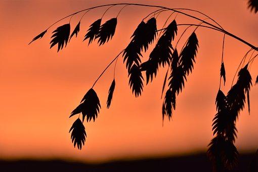 Grass, Back Light, Mood, Background, Sun, Nature