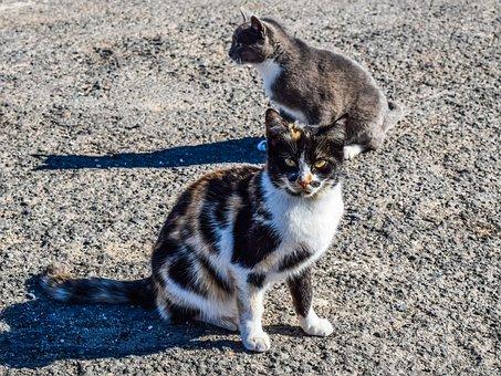 Cats, Stray, Street, Animal, Young, Kitty, Homeless