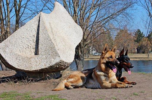 German Shepherd, Doberman, Dogs, Lakeside