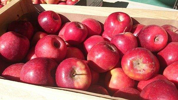 Apple, Red, Power, Fruit, Orchard, Garden, Red Apples