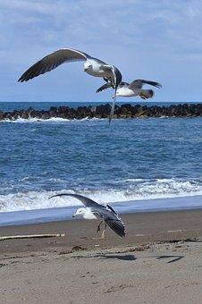 Animal, Sky, Cloud, Sea, Beach, Wave, Sea Gull, Seagull