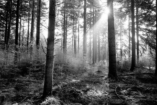 Forest, Sun, Green, Spring, Summer, Fresh, Atmosphere