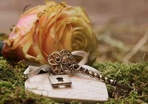 Rose, Floribunda, Blossom, Bloom, Rose Bloom, Romantic