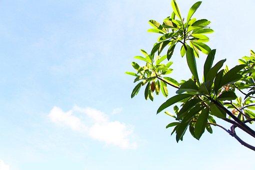 Sanya, Blue Sky, Green, Tree