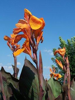 Flower, Orange, Nature, Flower Isolated, Blossom, Bloom