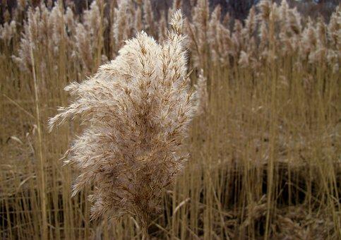 Sea-grass, Salt-marsh, Coast, Grass, Salt, Nature
