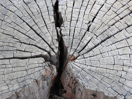 Tree, Rings, Wood, Nature, Texture, Cut, Stump