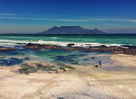 Table Mountain, Cape Town, South Africa, Beach, Dog