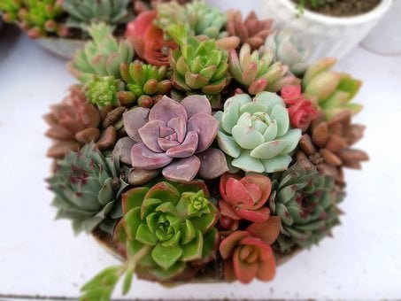 Succulent Plants, Potted Meat, The Fleshy