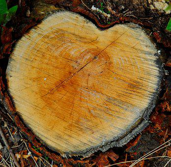 Heart, Wood, Love, Shape, Decoration, Romance, Symbol