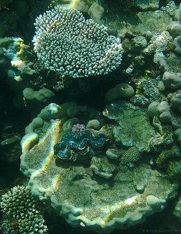 Coral, Underwater Photography, Underwater, Fish