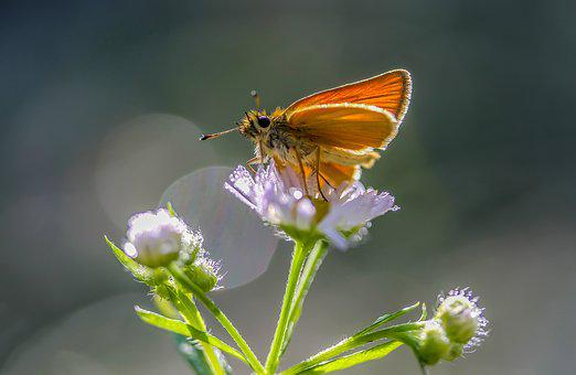 Butterfly, Flower, Insect, Nature, Flying Insects